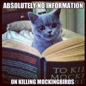 mockingbirdcat
